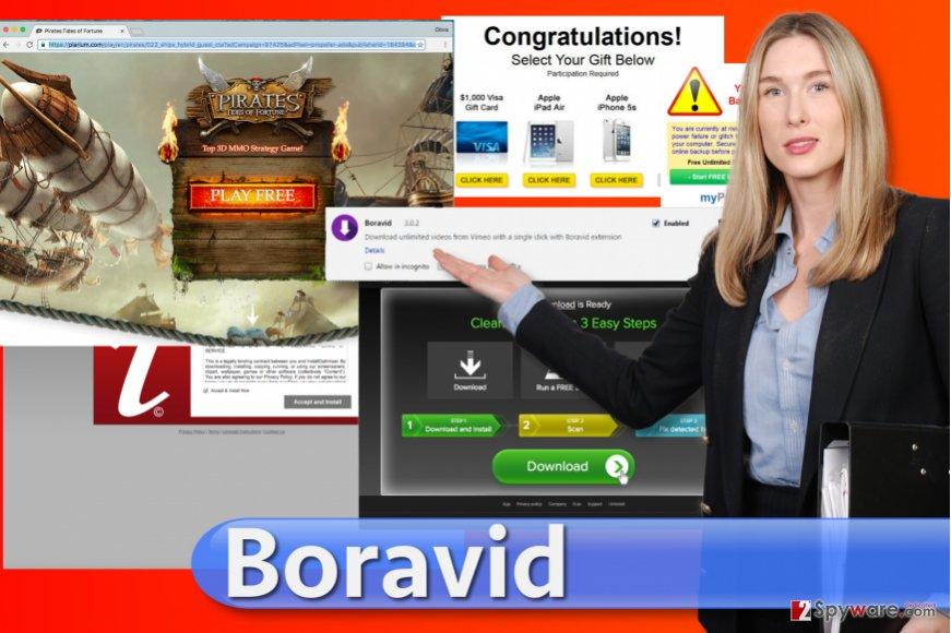 Boravid virus