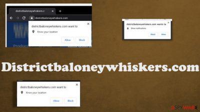 Districtbaloneywhiskers.com
