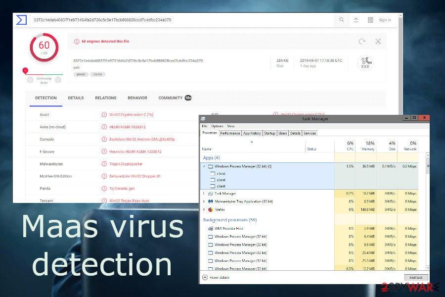 Maas virus detection