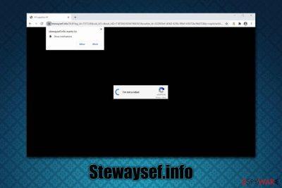 Stewaysef.info